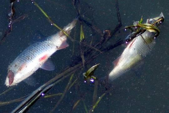 МинэкологииРТ узнает причины мора рыбы под Казанью