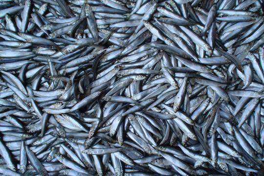 Втатарстанском водохранилище— памятнике природы— погибло 271 тонн рыбы