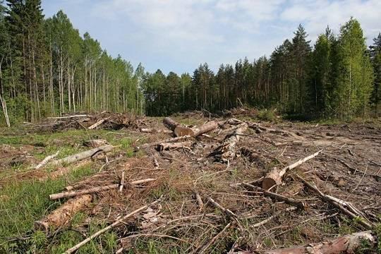 ВСМ «Москва— Казань»: «потери» компенсируют высадкой 164 тыс. растений